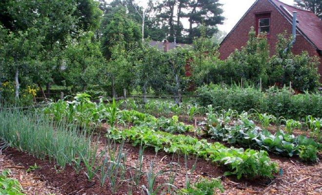: Выращивание овощей по Джевонсу