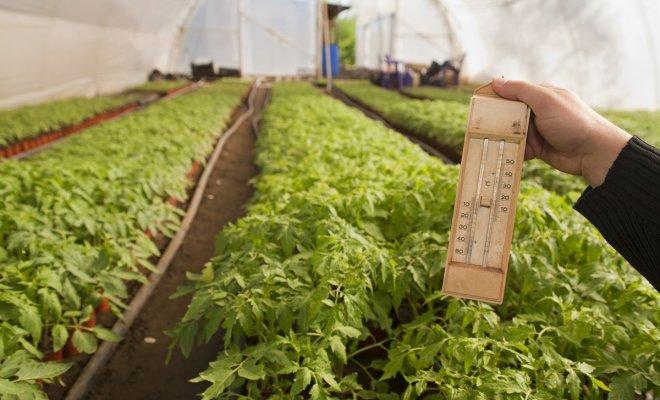 : Как защитить растения от жары в теплице