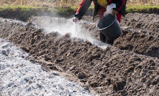 : Сколько извести нужно вносить в почву