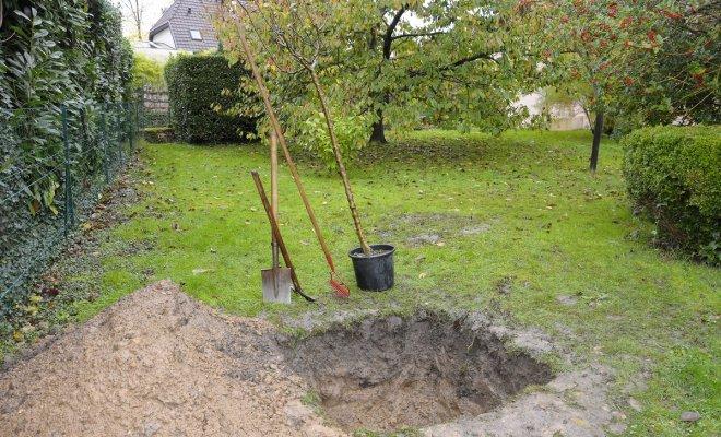: Посадка деревьев осенью