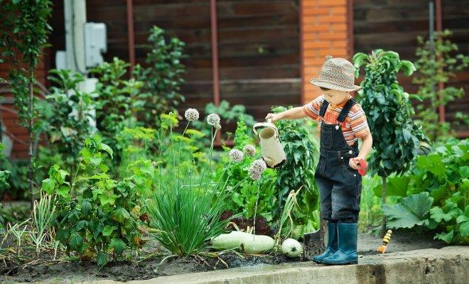 : Легкие для выращивания овощи