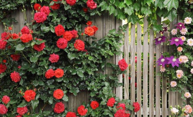 : Как замаскировать забор растениями