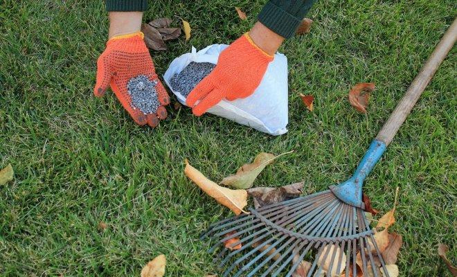 : Подготовка газона к зиме