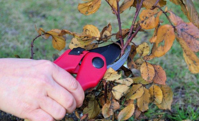 : Обрезка деревьев и кустарников