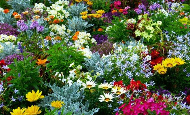 : Цветы для открытого грунта в мае