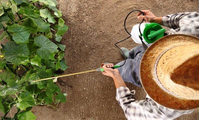 : Обзор садовых распылителей
