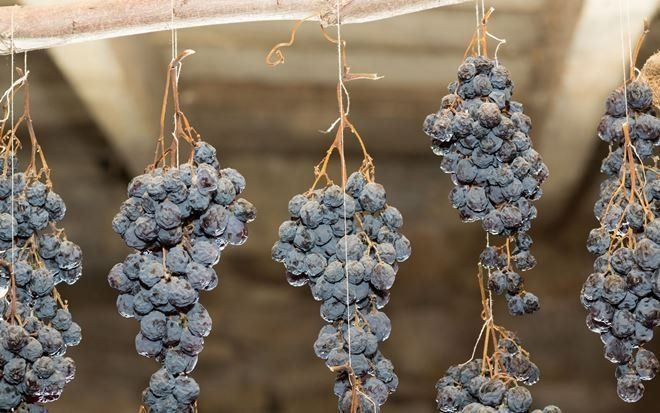 Виноград в подвале