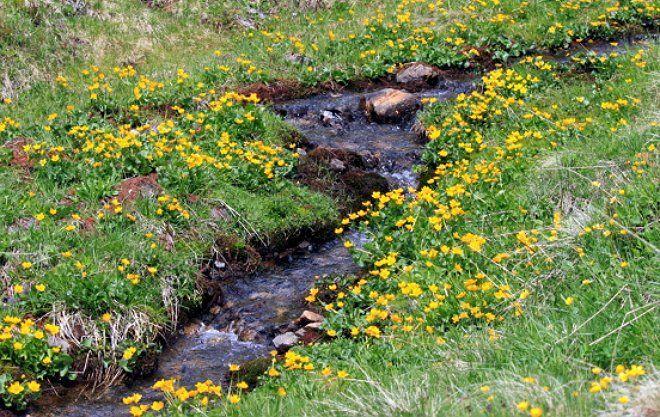 Чем естественнее выглядит обустроенное русло, тем выгоднее смотрится ручей на участке