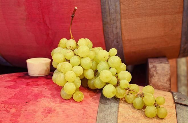 Виноград хранится 3-5 месяцев, а иногда и дольше
