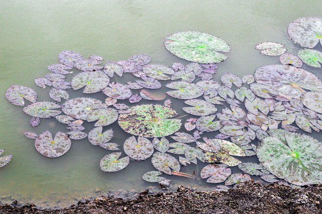 Декоративное болото может быть единственным водоемом на участке, но лучше всего оно смотрится в компании с прудом или ручьем