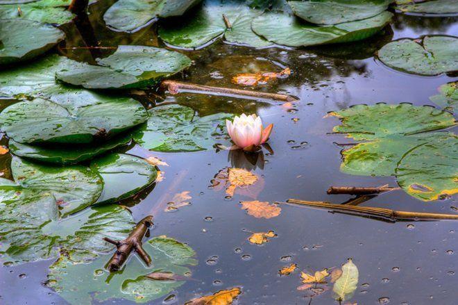 Некоторые растения оставляют на зимовку в водоеме
