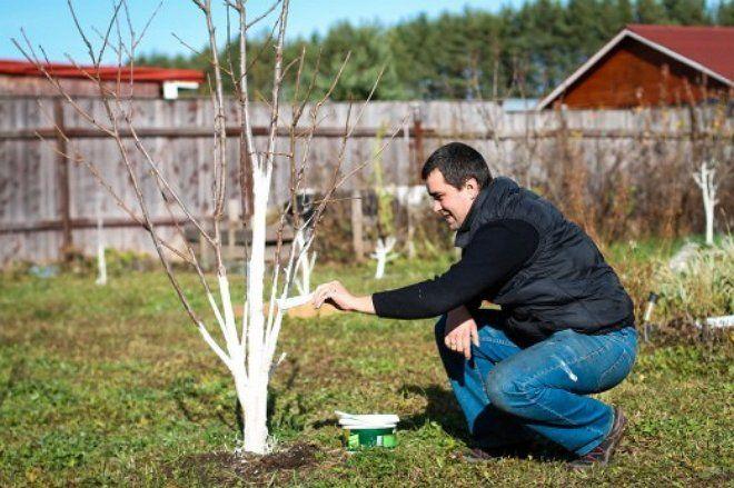 Обработка дерева известью