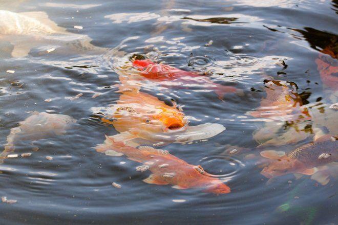 Чтобы рыба могла перезимовать в водоеме, необходимо специальное оборудование