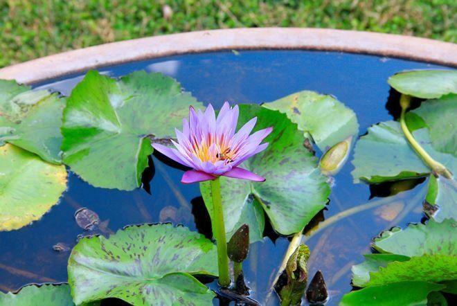 Оформление мини-водоема растениями - это всегда красиво и необычно