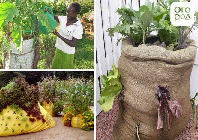 африканский огород в мешках