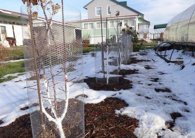 Защита деревьев мелкими сетками
