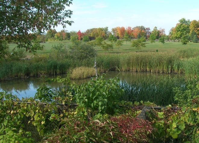 В природе болота называют легкими планеты