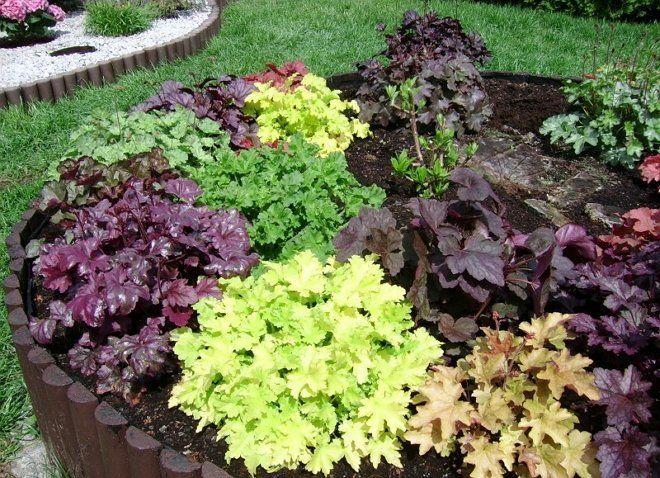Цветы для тени цветущие все лето или что посадить на клумбе в