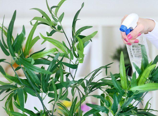 Опрыскивание домашних цветов