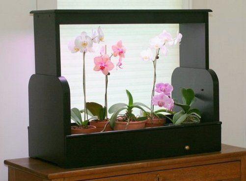 Досвечивание орхидей