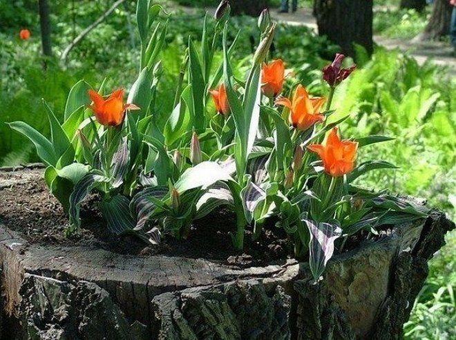 Цветы на пне