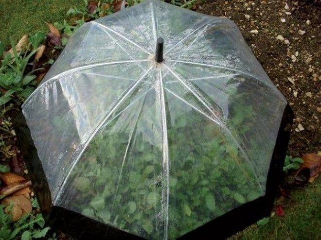 Зонтик-парник