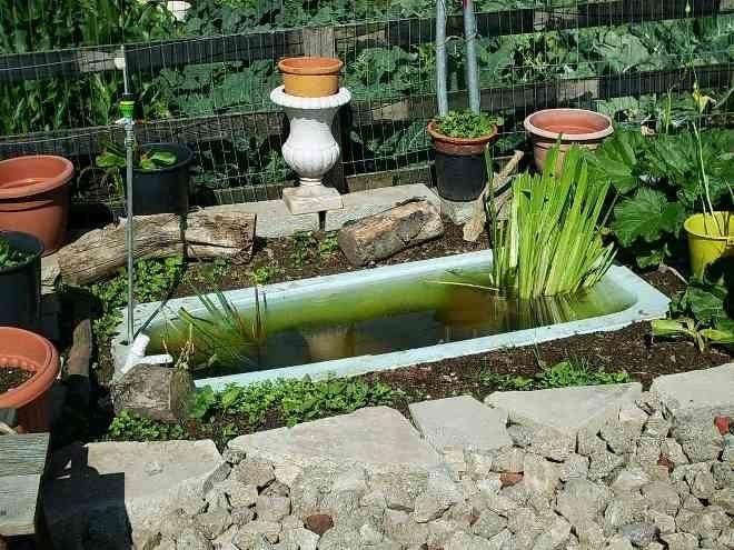 Водоемы из ванной имеют строгую прямоугольную форму
