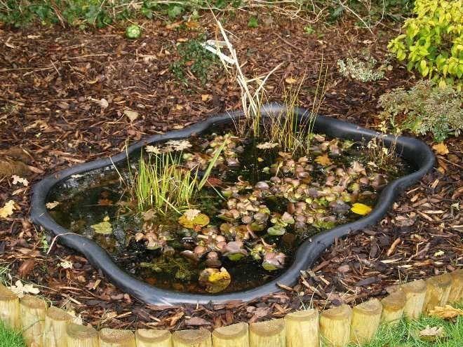 Чтобы упростить себе задачу можно устроить болото в готовой емкости
