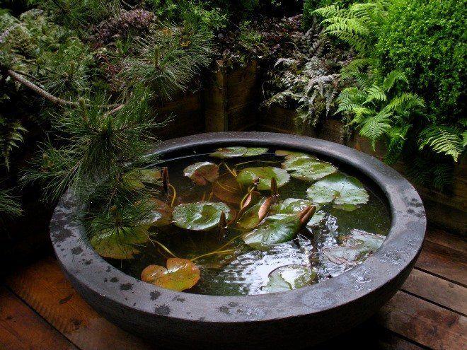 Мини-пруд можно создать из чего угодно, например, из старого пластмассового таза