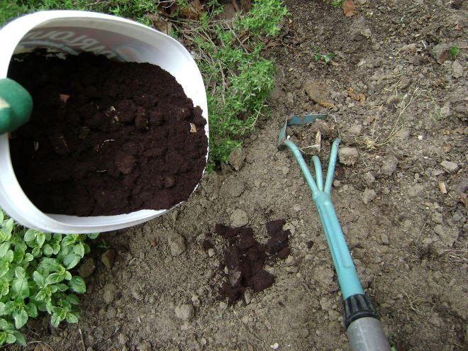 Применение кофейной гуще найдется и в огороде