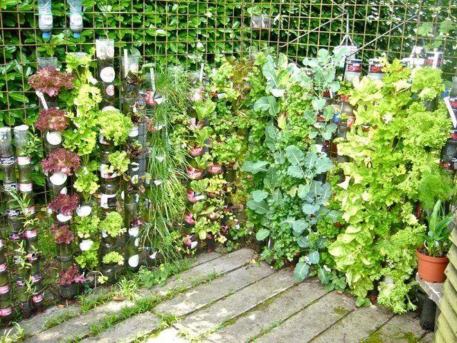 Вертикальные сады, собранные из горшков