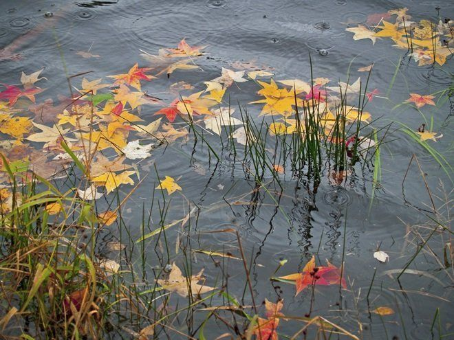 Перед началом листопада пруд нужно укрывать сеткой, чтобы в него не падали листья