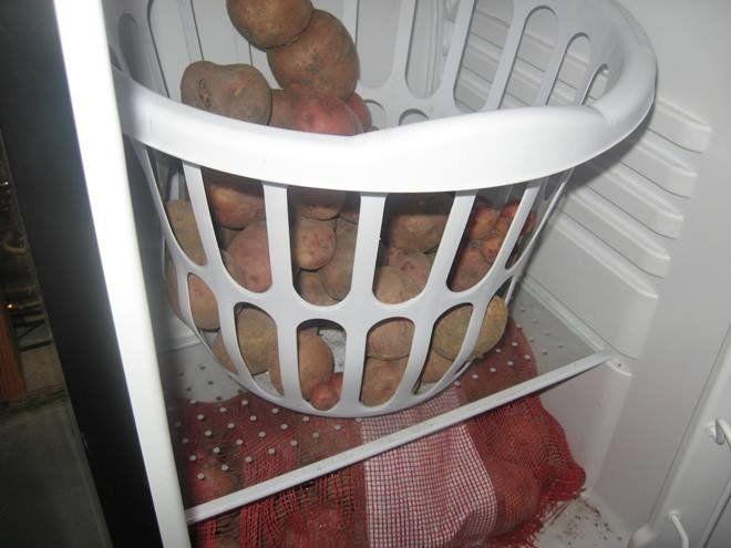 Как правильно хранить картофель в доме или квартире на грядк.
