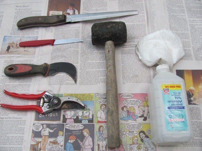 инструменты для обрезки пиона