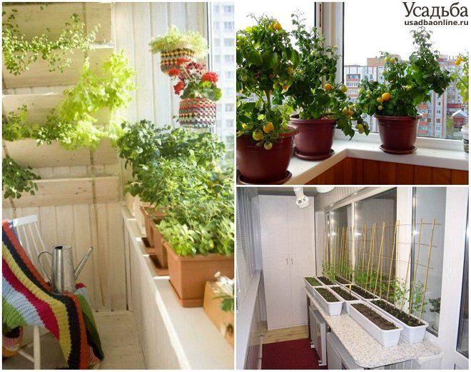 Выращивание растений на балконе