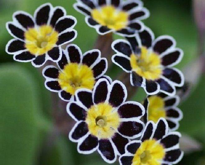 Что это за цветок по фото онлайн бесплатно без регистрации