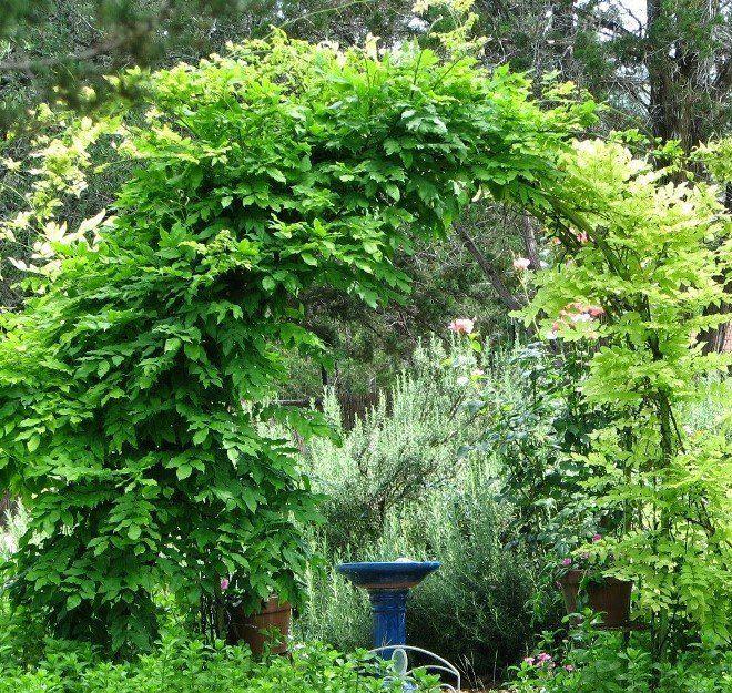 Арка-туннель - отличное украшение сада