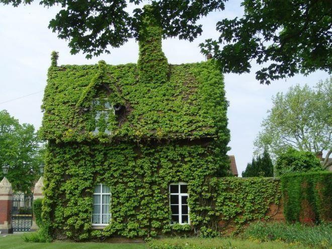Дом в английском стиле, укрытый плющом