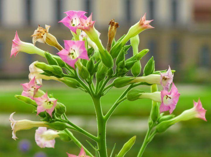 Какие цветы надо сеять на рассаду в марте? в цветнике (огоро.