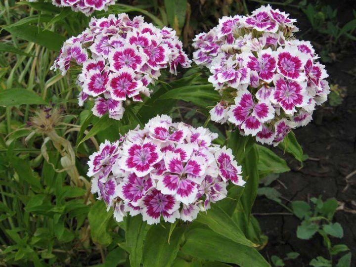 Какие цветы и семена цветов сажать осенью 26