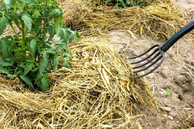 Мульча из сена