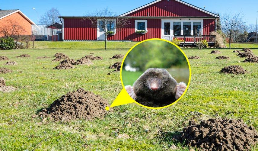 Крот, не ходи в мой огород, или Как избавиться от кротов на садовом участке