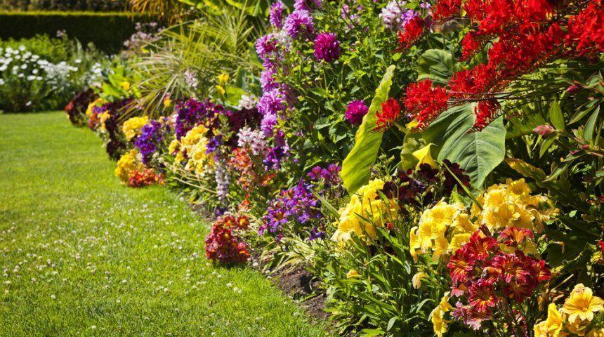 Фото садовых цветов смотреть