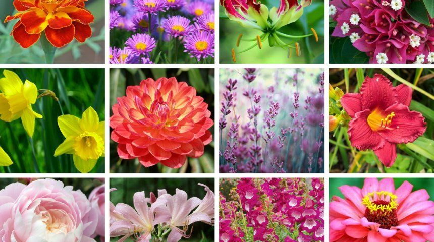 Какой вы цветок по знаку зодиака
