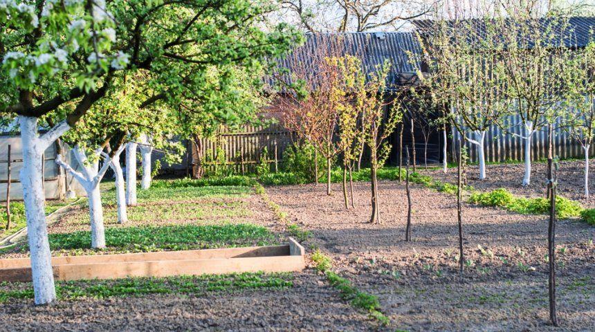 Как сделать дерево в саду