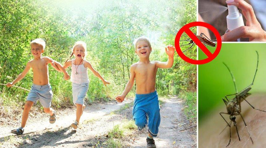 Как защитить детей на природе от укуса насекомых? Комары, клещи, пчелы и осы