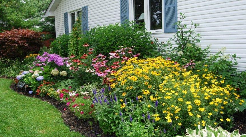 Неприхотливые многолетники для сада: когда уход сведен к минимуму рекомендации