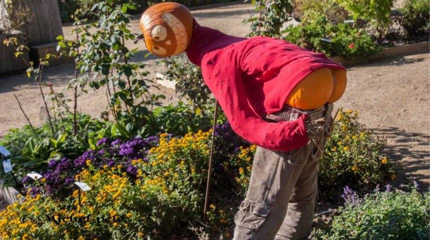 jardinez.com