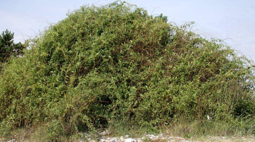 Плодово ягодные деревья и кустарники