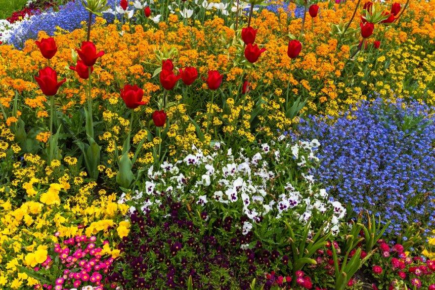 ландшафтные природных цветник